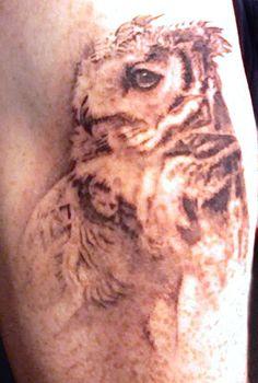 owl - Amanda Wachob