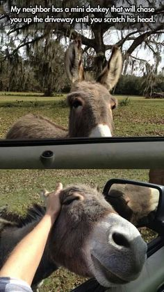 What a friendly donkey (: