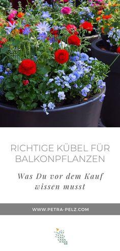 Gekonnt gepflanzt, geschickt platziert, machen farbige bepflanzte Töpfe jeden Balkon, jede Terrasse und Hauseingang wohnlich. Mit Frühlingsblumen zeigst Du dem Winter die kalte Schulter und bringst Farbe in den Garten, auf den Balkon oder die Terrasse. Blumenkästen bepflanzen |  Blumenkästen Frühling | Blumenkästen bauen | Blumenkästen Balkon| Balkonpflanzen Ideen | Frühling Garten Ideen | Frühling Garten Blumen | Garten Frühling DIY | Blumentöpfe bepflanzen modern| |  #Petra Pelz Winter Garden, Beets, Beautiful Gardens, Planting Flowers, Planter Pots, Orange, Deco, Urban Gardening, Plants