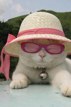 Coisa de chiquérrimas: curtir o sol! #chic #sol #verão #gatinho