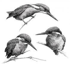 Drie ijsvogels