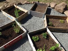 pallkragar,kryddor,kryddträdgård,köksträdgård,trädgård
