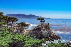 Lone Cypress, Big Sur, 17 mile drive ✨    C A L I 🌳💛 • • • #lonecypress #bigsur #california #cali #visitcalifornia #lensbible #calilife #wonderful_places #travelgram #travelphotography #instapic #photooftheday #beautifuldestinations #instagood #roadtrip #summer #naturegram #adventure #landscape #landscapephotography #naturegram #naturalbeauty #17miledrive #pebblebeach #westcoast #usa #like4like #mytravelgram #myphotographybeginshere #calocals - posted by Travel Photography 📷🌏…