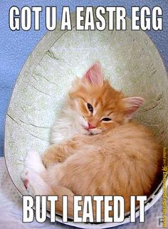Funny Easter Cat | RandiPDX HAPPY EASTER TO YOU DARLING!!!! http://inno...