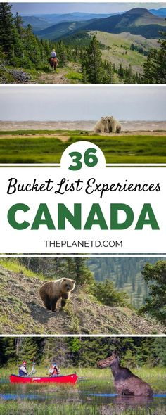 36 of the best bucke