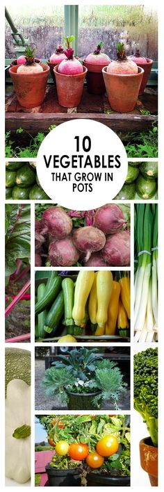 10 Vegetables that Grow in Pots Vegetable gardening growing veggies container gardening popular pin growing veggies in containers gardening hacks easy gardening.