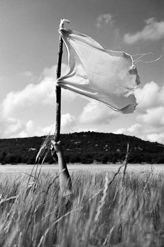 Woman's arm holding a white flag in wheat field por Sami Sarkis en Getty Images.