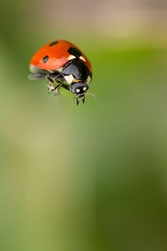 Ladybug #WOWparksandzoos