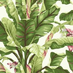 Sample Banana Leaf Wallpaper in Green and Pink design by York Wallcoverings