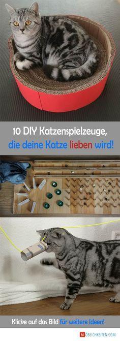 Klicke auf das Bild für mehr DIY Katzenspielzeuge und mehr Details! So einfach machst du deine Katze glücklich! #katzenspielzeug #diy #katze
