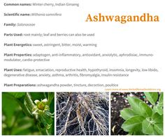 The first writings about the benefits of ashwagandha are in Ayurveda texts from roughly 3,000 - 4,000 years ago. Ayurveda classifies ashwagandha as a rasayana. A rasayana is an herb that deeply rejuvenates and promotes longevity.   Rasayanas are especially revered for bringing health into the elder years.