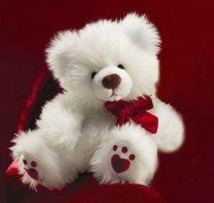 Beautiful+Nice+Teddy+Bears | Download Most Beautiful Teddy Bear Desktop wallpapers,Very Cute Teddy ...