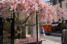 Retail Windows ~ Jo Malone shop - how cool is this blossom coming out from the inside?!