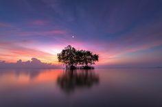 lovers tree - null