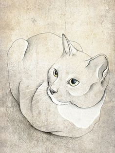 Abby's Illustrations!: Animal Updates...