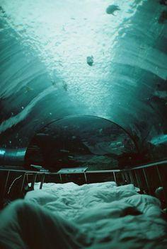 Have a slumber party at an aquarium.