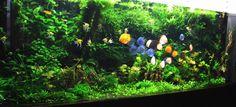 Big Planted Aquarium