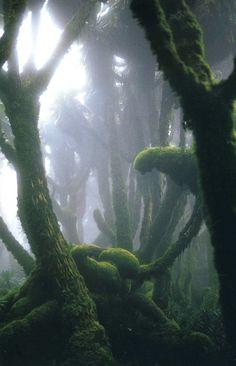 Michael Nichols-Fog-EnshroudedRain Forest in Rwanda's Virunga Mountains.