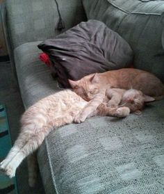 21 Pets That Need Five More Minutes! Awe!! It's like he's holding him so he doesn't fall off while they sleep.