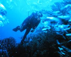 Some say the real treasure of this fascinating sultanate lies beneath the dazzling, warm crystal waters of the Arabian Sea, where abundant marine life and forests of colourful corals make for a magical underwater experience.  http://kenwoodtravel.co.uk/blog/come-dive-with-me-underwater-adventures-in-oman/