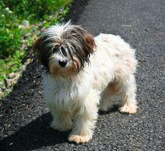 cute dog Zdreantza