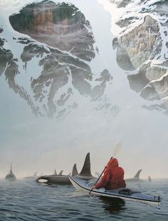 canoeing with orcas.  @Kristine E,, this wii be us in 5 months :)