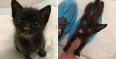 Kitten No One Knew Would Survive, Beats the Odds and Can't Stop Squeaking for Love
