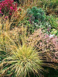 15 Top Native Plants of the Pacific Northwest Tuffed Hairgrass, native to pacific NW. Love the modern landscaped lawn, with minimal grass to mow! From Better Homes and Gardens. Modern Landscaping, Landscaping Plants, Front Yard Landscaping, Landscaping Ideas, Backyard Ideas, Hillside Landscaping, Backyard Projects, Outdoor Projects, Garden Show