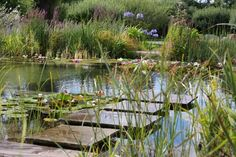 Near Newark-on-Trent, Nottinghamshire in the United Kingdom is a natural swimming pool that looks like an idyllic pond and has an aquatic garden to keep th Natural Swimming Ponds, Natural Pond, Swimming Pools, Lap Pools, Indoor Pools, Backyard Pools, Pool Decks, Backyard Ideas, Plantas Indoor