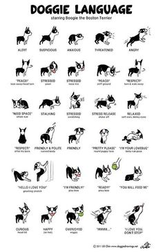 How to understand your dog