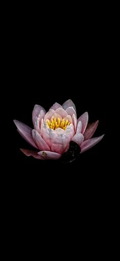 Amoled Wallpapers, Newest Smartphones, Cloud Mining, Nature Hd, Cool Backgrounds, Lotus Flower, Flowers, Dark, Store
