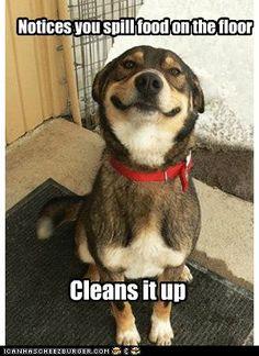 What a good little helper!