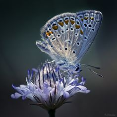 Stunning photo; looks like the light is coming from within butterfly and flower!