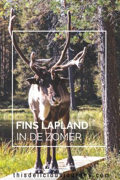 Lapland in de zomer: zo mooi is dat! Travel To Saudi Arabia, Europe Travel Tips, Finland, New Zealand, Travel Inspiration, Beautiful Places, Beren, Journey, Horses