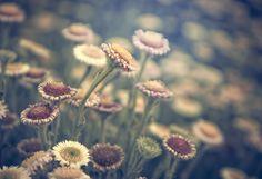 Inspirational Photography by Rachel Bellinsky