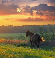 I really want to be in the country ...with horses and dogs