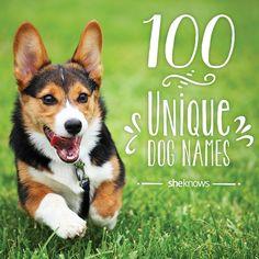100 Super unique dog names for your new pooch pal