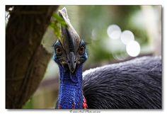 Casoar à casque by Axel Photo-art on 500px