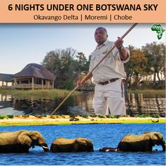 There is no place on Earth that can compare with a safari experience like the Okavango Delta & Moremi in Botswana, offering both water and land based safaris from tents to upscale lodges. Compassline will ensure an itinerary designed around your interests and time constraints. Okavango Delta, Management Company, African Safari, Tents, Lodges, Places To Go, Southern, Earth, Water