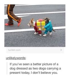 If you're gonna dress your dog up, it better be good!