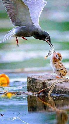 Momma Bird Feeding Baby!!