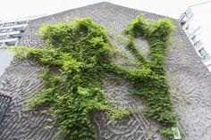 Faire disparaître une quarantaine de murs aveugles en les végétalisant. Ce tour de passe-passe n'embellit pas seulement les quartiers concernés. Il contribue aussi à l'environnement - en créant un microclimat - et à la biodiversité, en offrant un abri aux oiseaux et aux petits mammifères