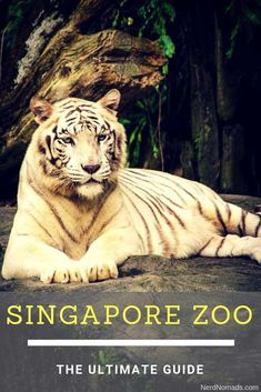 Singapore Zoo and Night Safari should be on your list if you are visiting Singapore as it is awesome! Here we give you the ultimate guide to Singapore Zoo and Night Safari. Singapore Travel Tips, Singapore Itinerary, Singapore Zoo, Visit Singapore, Zoo Pictures, Wild Animals Pictures, Singapore Attractions, Gardens By The Bay, Zoo Animals