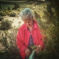 Rita gathering juniper berries on yesterday's trip.  #wildcrafting #juniperberries #neighbor #herbalgoodness #herbnerd #roadtrip #myherbalstudies #desert #sagebrushsteppe #herbalism