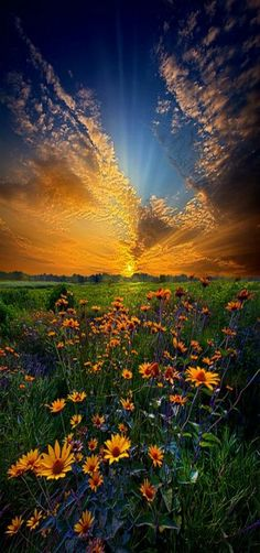 "Fantastic landscape photograph of a field of daisies at sunrise in Wisconsin, entitled ""Daisy Dream"" by Phil Koch on Captured with a Canon EOS Focal Length Shutter Speed Aperture ISO/Film flowers Beautiful Sunset, Beautiful World, Beautiful Places, Beautiful Flowers, Beautiful Beautiful, All Nature, Amazing Nature, Nature Tree, Landscape Photography"