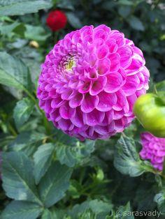 Rare Flowers, Pink Flowers, House Plants, Note, Fine Art, Garden, Beautiful, Roses, Plants