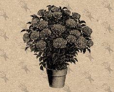 Vintage image Sunflower Flower Instant Download Digital printable clipart graphic  fabric transfer decoupage burlap iron on etc HQ 300dpi
