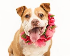 Animal Services has hundreds of adoptable pets at any given time. Rescue Dogs, Animal Rescue, Farm Animals, Animals And Pets, Cute Dogs And Puppies, Love Pet, Beautiful Soul, Dog Care, Pit Bull