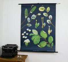 Vintage Botanical Chart Willow German Educational by BonnieandBell