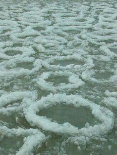 Pancake ice on lake Michigan in Chicago Ice Ring, Snow Sculptures, Lake Huron, Lake Erie, Lake Michigan, Great Lakes, Amazing Nature, Chicago, Funny Pets